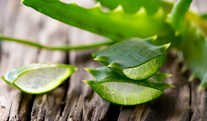 Aloe Vera is a good treatment for cactus stings