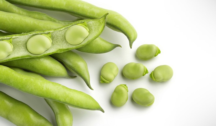 Broad beans increase dopamine content to treat Parkinson's