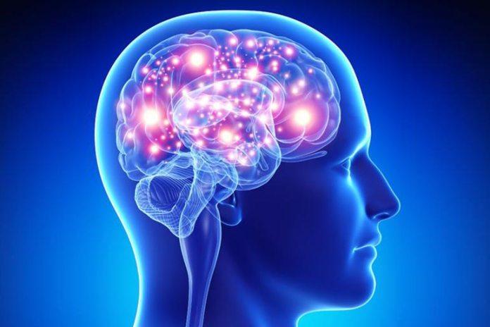 Fulvic acid promotes brain health