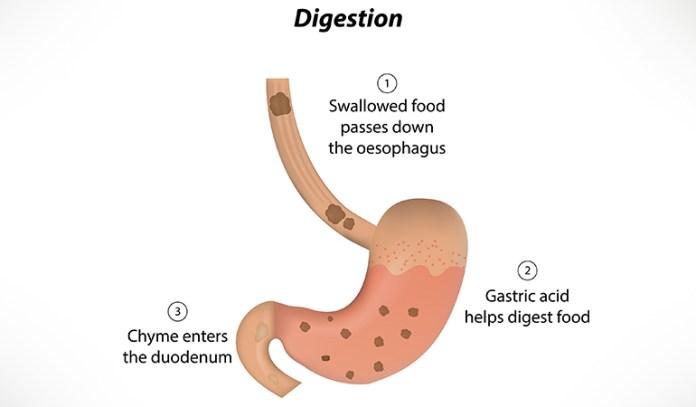 Feverfew Improves Digestion
