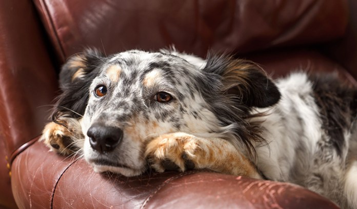 symptoms of dehydration in dogs Loss Of Skin Elasticity