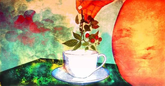 raspberry leaf tea during pregnancy