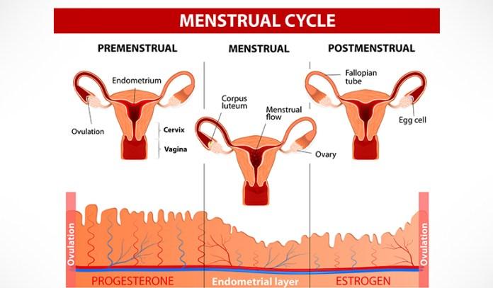Sarpagandha Regulates Menstruation