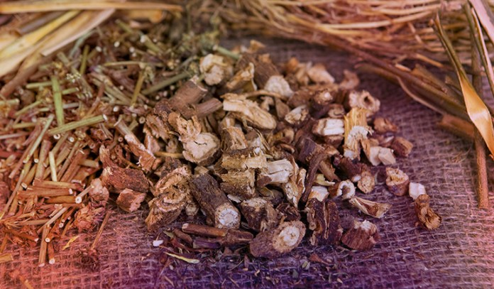 Chicory root is high in prebiotic content
