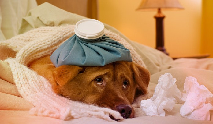 Is your dog sick