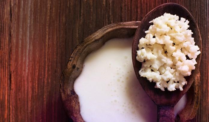Milk kefir grains is rich in probiotic content.