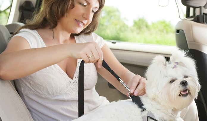It is a new place and make sure you keep your dog safe and not leave him astray