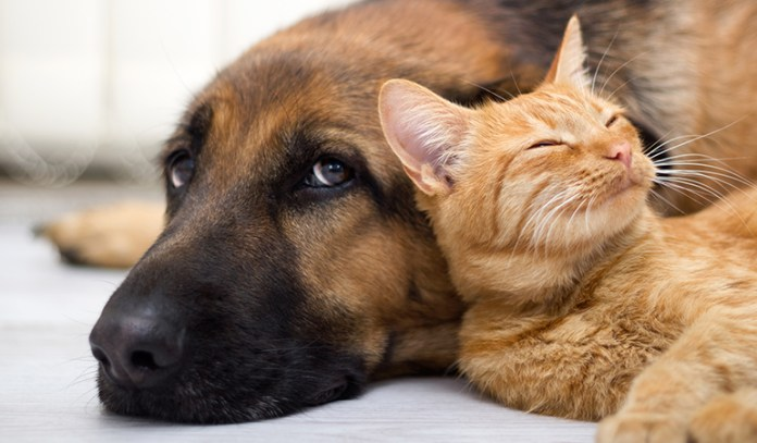 Dietary indiscretion is a common cause of diarrhea in dogs and cats