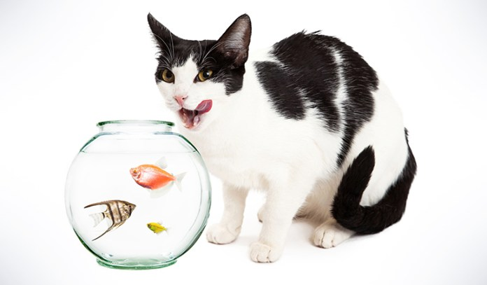 Feeding your cat only fish may lead to your cat having brittle bones, bone and joint pain, dry skin, and can even cause death