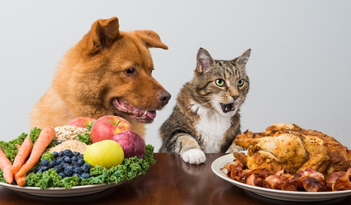 Veterinary nutritionists believe that healthy older pets need just as much protein as healthy middle-aged ones.