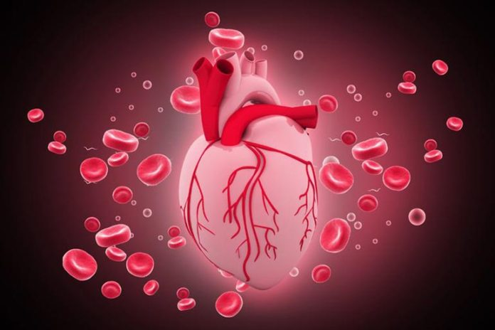 LDL increases the risk and HDL decreases the risk of heart disease