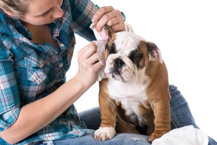 Apple cider vinegar can help clear ear infections