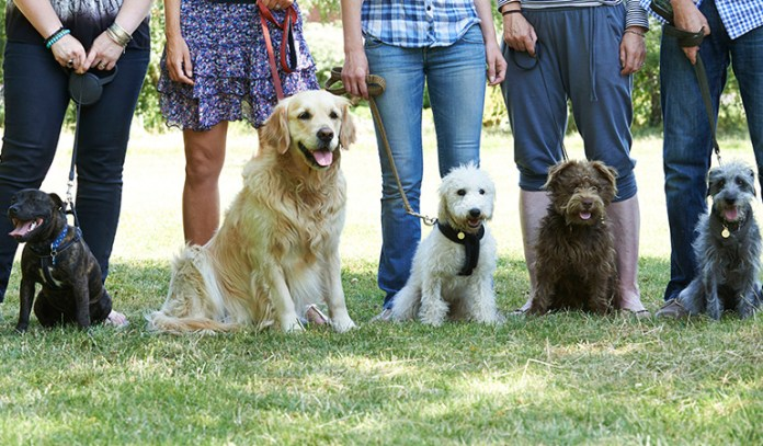 Dog owners make friends more easily.