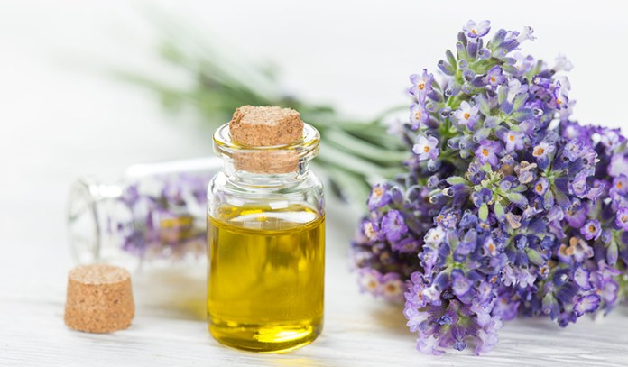 Lavender Promotes Calmness And Relaxation