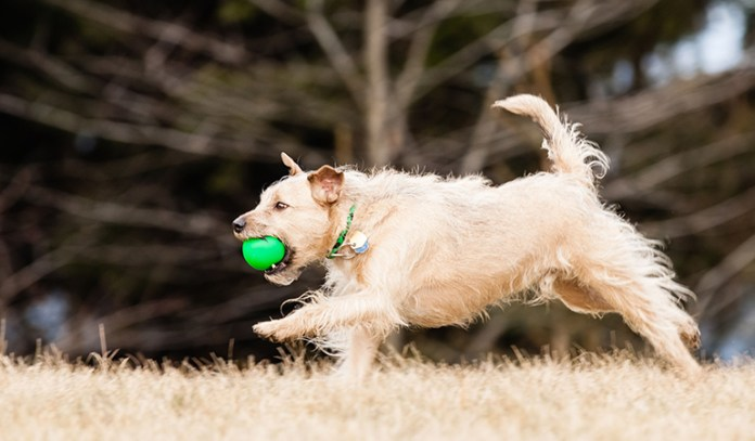 healthy dogs: mutts