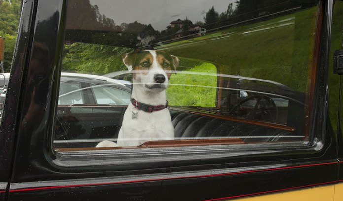 Many cases of dog deaths have occurred due to the owners leaving the dogs in their cars, so it is best to avoid them