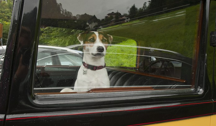 Many cases of dog deaths have occurred due to the owners leaving the dogs in their cars, so it <!-- WP QUADS Content Ad Plugin v. 2.0.26 -- data-recalc-dims=