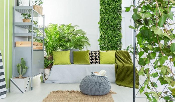 Most Suitable Plants For Indoor Vertical Garden