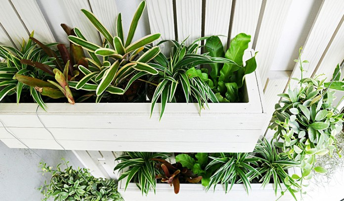 Best Plants For Purifying The Air