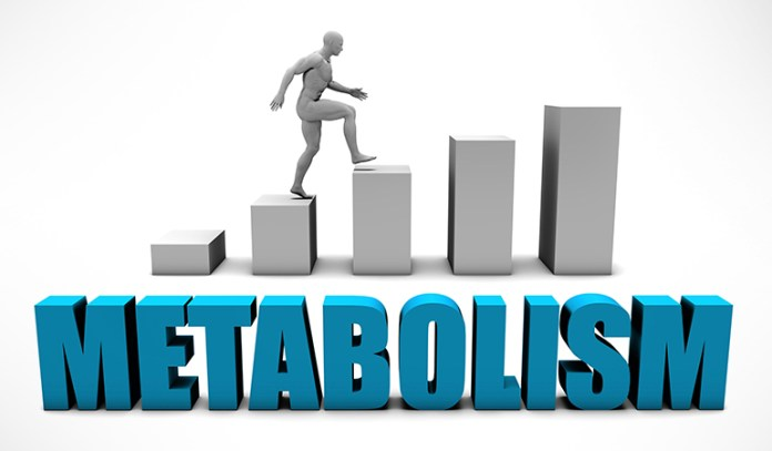 Calorie-restricted diet can lower your metabolism