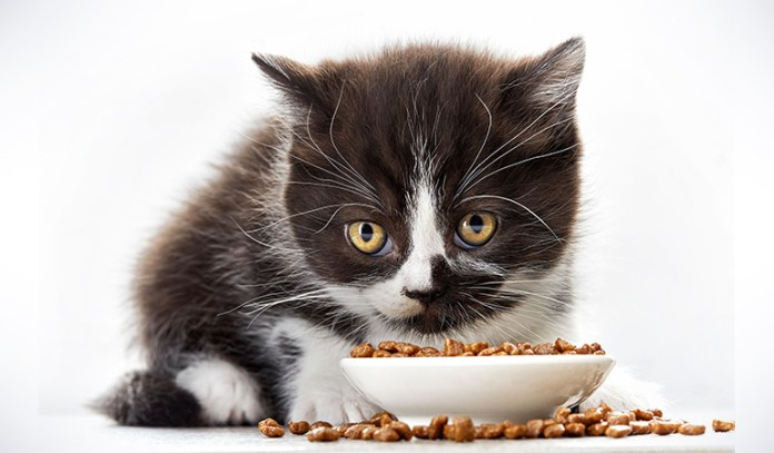 Dry food is loaded with grain or potato, which means your cat will lose out on a healthy diet if you stick only to dry food.