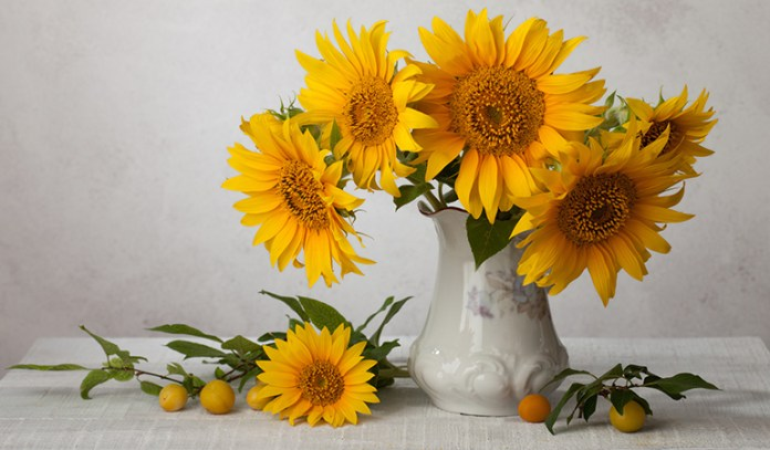 sunflowers and seeds can be allergic to some