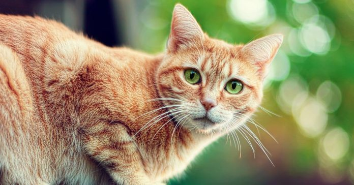 Here is some information about these common behavioral problems in cats