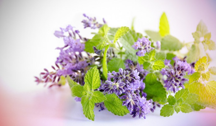 Lemon balm can be used in floral arrangements to keep insects away.