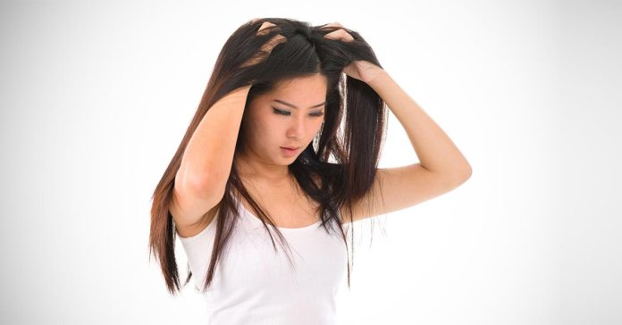 Olive oil can be used alone or with a combination of other natural ingredients to treat eliminate dandruff.