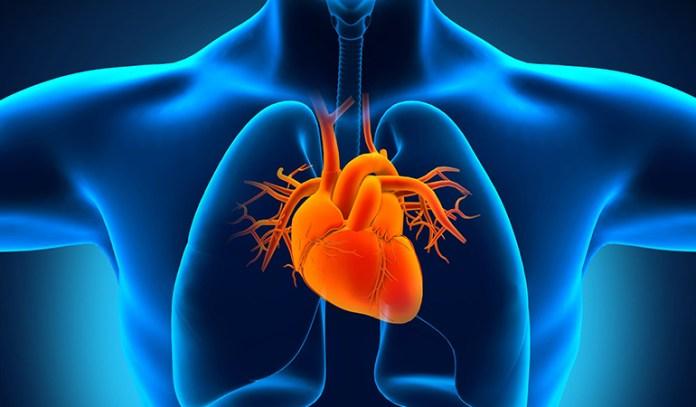 Fluoroquinolones can cause cardiotoxicity