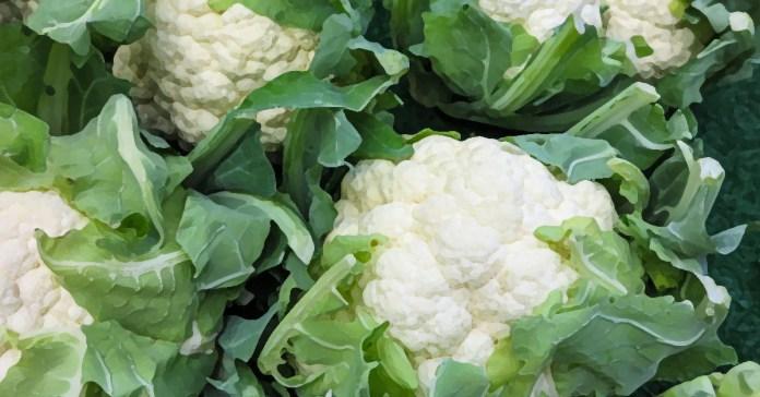 Cauliflower in a low starch diet