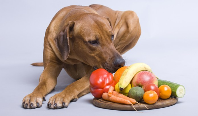 Besides these aids, you can exercise your dog, give him/her whole raw foods and also be closely attached to him/her always.