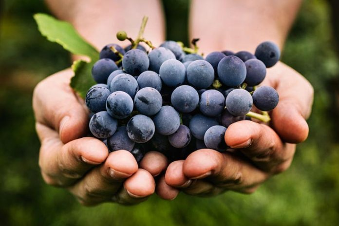 Grapes have a low glycemic index