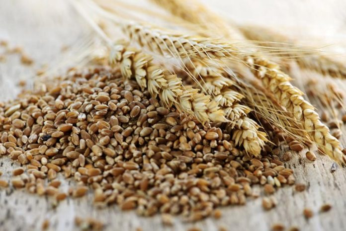 wheat grains are good starches