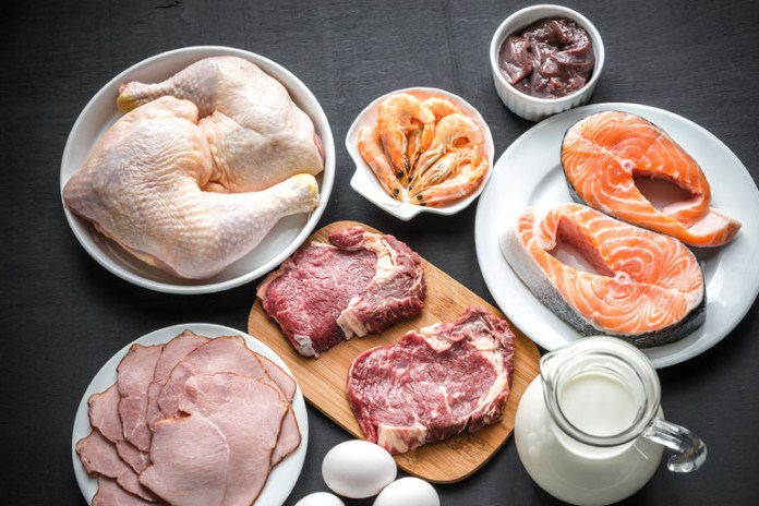 All you need to know about protein
