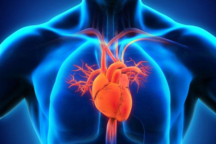 Probiotics can lead to endocarditis