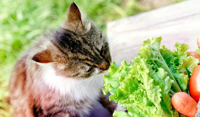 Your Kitty Is A Carnivore