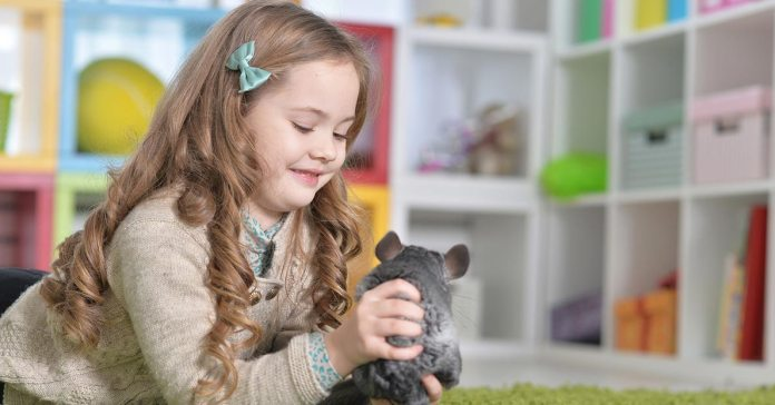 Chinchilla Facts To Know Before Buying One