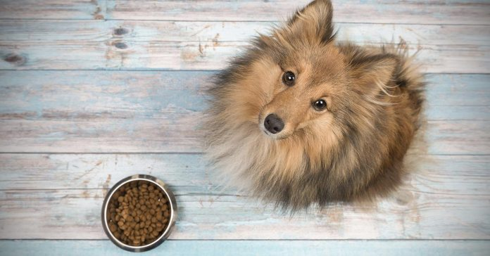 Reasons Why Your Dog Isn't Eating