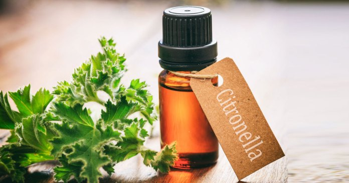 Citronella has many great uses in and around the house.