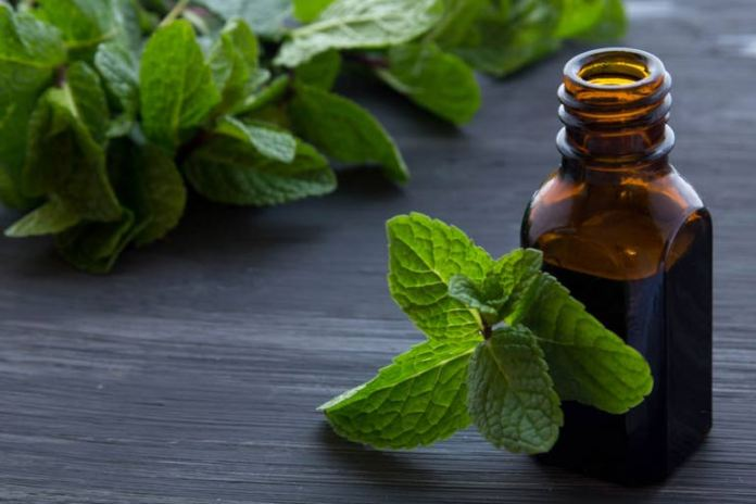 peppermint oil for insects