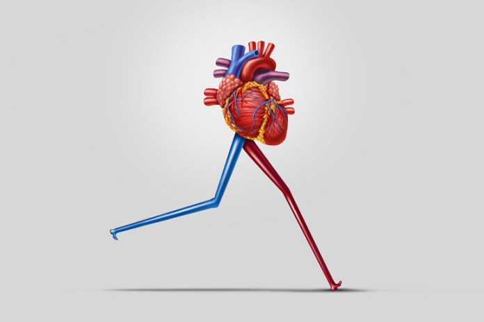 Hindu push-ups improves cardiovascular health