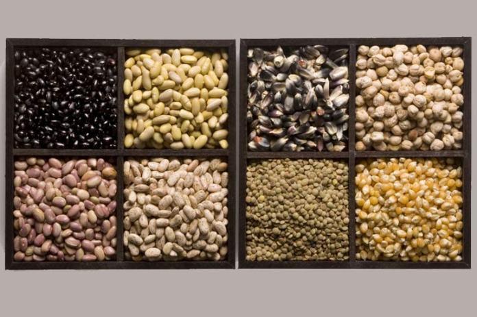 Seeds fill you <!-- WP QUADS Content Ad Plugin v. 2.0.27 -- data-recalc-dims=