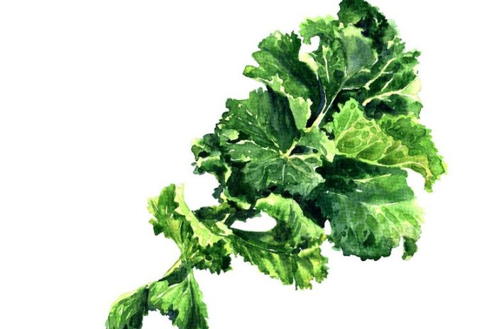 Kale is low-fat and healthy.