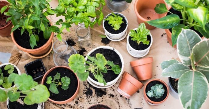 Plants that can live and grow in low light.