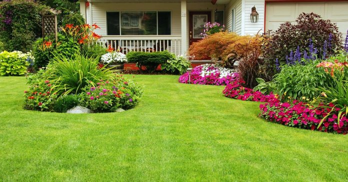 Keep Lyme Disease Out Of Your Yard