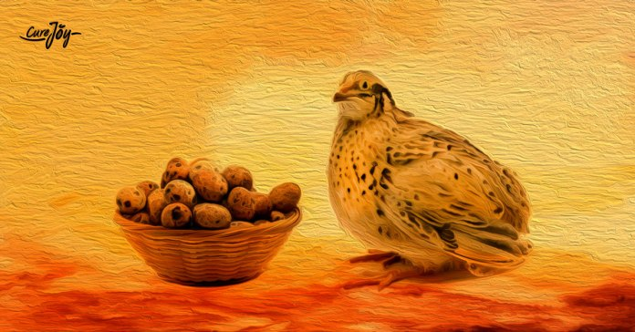health benefits of quail egg