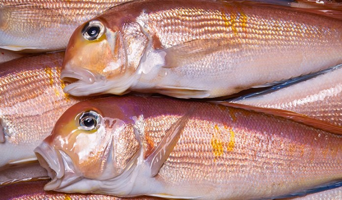 Tilefish from the Gulf of Mexico can be highly contaminated with mercury
