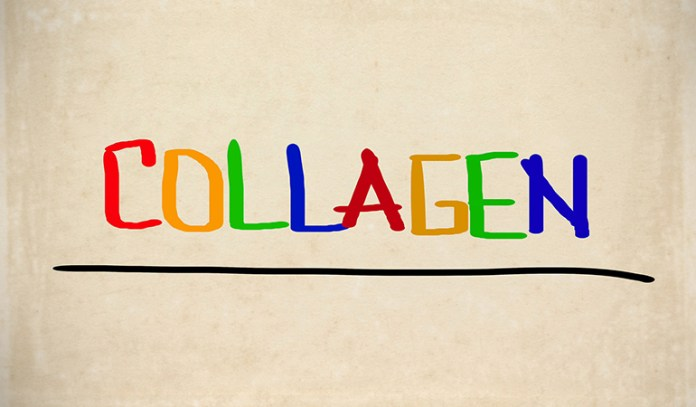 Collagen Is A Protein Found In Muscles And Bones