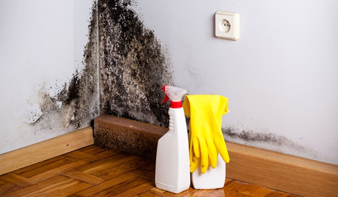 Mold is a group of fungi that spreads by making spores.